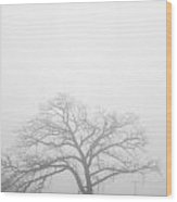 Oak Tree In Fog Wood Print