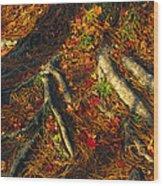 Oak Tree Roots And Pine Needles Wood Print by Raymond Gehman