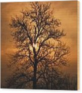 Oak Tree Sunburst Wood Print