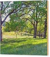 Oak Trees In The Spring Wood Print