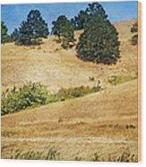 Oaks On Grassy Hill Wood Print
