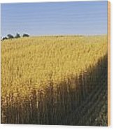 Oat Crops On A Landscape, County Dawn Wood Print