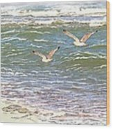 Ocean Seagulls Wood Print by Cindy Wright