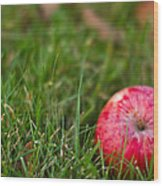 October Apple Wood Print