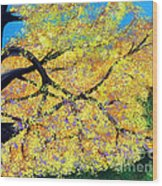 October Fall Foliage Wood Print