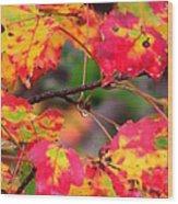 October Maple Wood Print