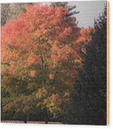 October Sunlight On Tree Tops Wood Print