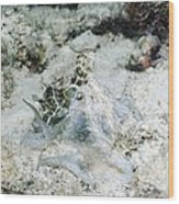 Octopus On The Seabed Wood Print by Georgette Douwma
