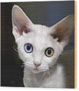Odd-eyed Kitten Wood Print