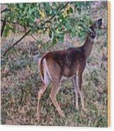 Oh Deer Me Wood Print by Myrna Migala