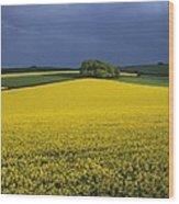 Oilseed Rape Crop (brassica Napus) Wood Print