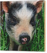 Oink-ing It Up... Wood Print