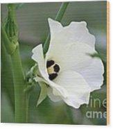 Okra Flower Wood Print