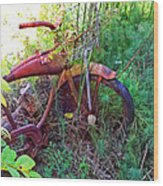 Old Bike And Weeds Wood Print