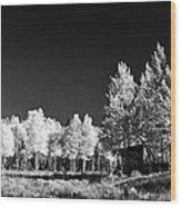 Old Cabin In The Aspen Wood Print