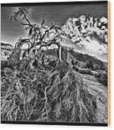 Old Desert Tree Wood Print