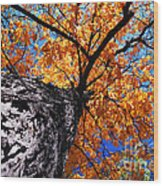 Old Elm Tree In The Fall Wood Print