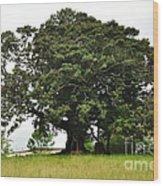 Old Fig Tree - Ficus Carica Wood Print by Kaye Menner