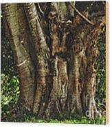 Old Fig Tree Wood Print by Kaye Menner