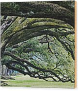 Old Growth Trees Wood Print by Jeremy Woodhouse
