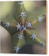 Old Man Cactus Lophocereus Schottii Wood Print