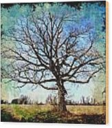 Old Oak Tree Wood Print