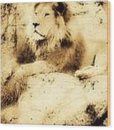 Old Photograph Of A Lion On A Rock Wood Print