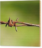 Old Rusty Twisted Barbed Wire Wood Print