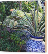 Old Town Potted Cactus Wood Print