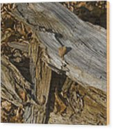 Old Tree Trunks And Leaves Decaying Wood Print