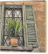 Old Window And A Green Plant Wood Print
