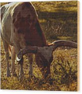 Older Texas Long Horn  Wood Print