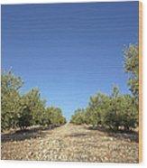 Olive Grove Wood Print