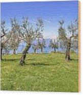 olive grove on Lake Gardan Wood Print