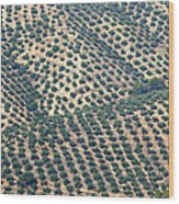 Olive Groves, Andalusia, Southern Spain. Wood Print