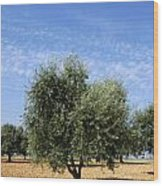 Olive Tree In Provence Wood Print