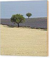 Olive Trees. Provence Wood Print