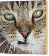 Oliver The Cat Wood Print