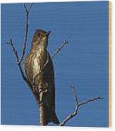 Olivesided Flycatcher Wood Print