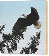 Olympic Bald Eagle Wood Print