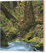 On The Banks Of Big Spring In The Missouri Ozarks Wood Print