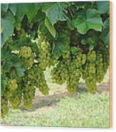 On The Vine - Before The Wine Wood Print