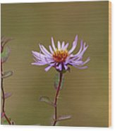 One Blossom Left Wood Print
