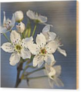 One Fine Morning In Bradford Pear Blossoms Wood Print