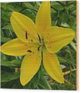 One Flower In Yellow Wood Print