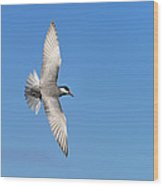 One Good Tern Deserves Another Wood Print