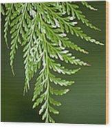 One Hanging Fern Wood Print