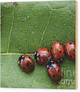 One Lady Bug Voted Off The Island Wood Print