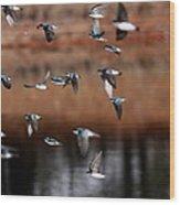 One Last Swallow Wood Print