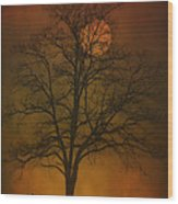 One Lonely Tree Wood Print by Tom York Images